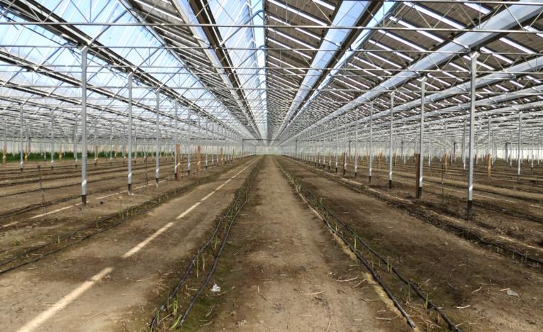 80 000 asperges vont sortir de terre sous la serre réalisée par Tenergie à Mallemort. (Photo JC Barla)