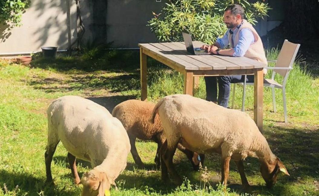 Le Mouton à 5 pattes accueille des collaborateurs spécifiques dans ses locaux de Marseille.