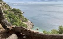 Reverdir le parc national des calanques en posidonies et mesurer le CO2 piégé