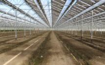 Tenergie sème des serres photovoltaïques dans les champs