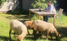 Le Mouton à 5 Pattes écolo et engagé !