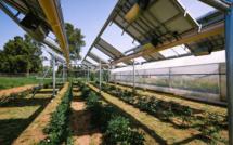 Ombrea lève 10 millions d'euros pour ses ombrelles agrivoltaïques